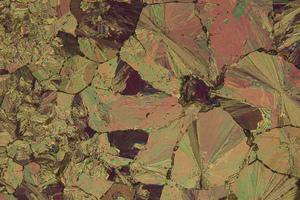 Picture of Wild Granite Rose