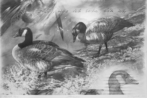 Picture of Brent Geese