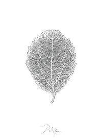 Picture of Flip Side of the Leaf