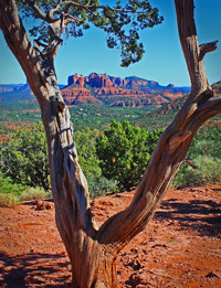 Picture of Sedona Framed