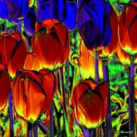 Picture of Tulips 3